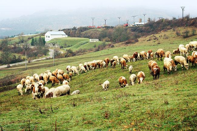 Banska-Bystrica_www